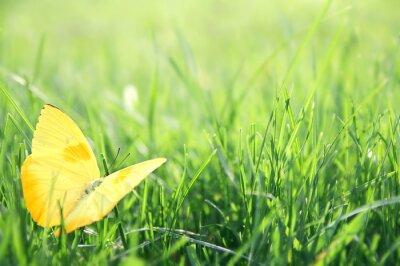 Poster Yellow Butterfly in Green Grass Hintergrund