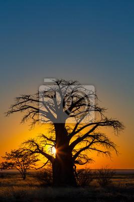 Yellow sunrise behind baobab tree on Kukonje Island