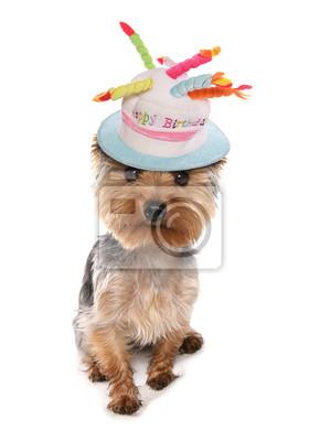 Yorkshire Terrier Geburtstag Wandposter Poster Alles Gute Zum