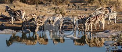 Zebra Herde Trinkwasser, Okaukeujo Wasserloch