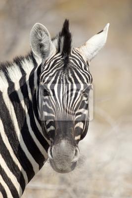 Zebra-Kopf