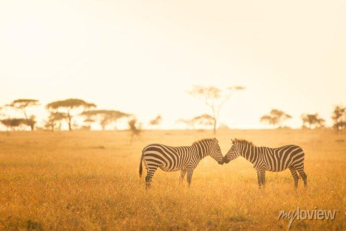 Poster Zebra-Liebe in der Serengeti