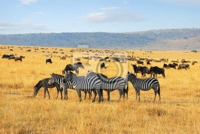 Zebras und Antilopen Gnu in der Savanne