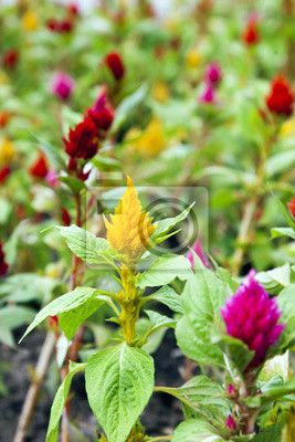Zierpflanzen auf einem Bett