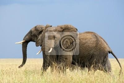 Zwei afrikanische Elefanten Angst laufen in der Savanne