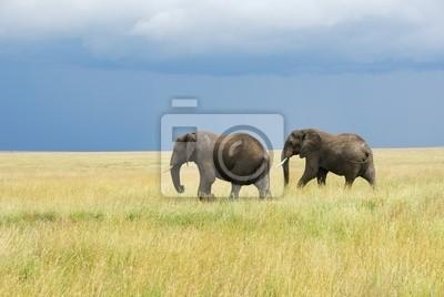 Zwei Elefanten laufen in der Savanne