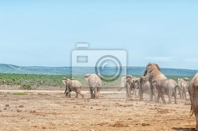 Zwei Elefanten Paarung