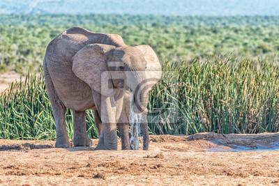 Zwei Elefanten trinken Wasser