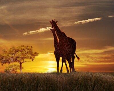 Poster Zwei Giraffen im Sonnenuntergang