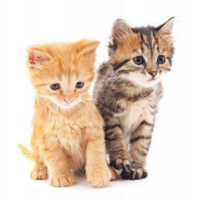Poster Zwei Kätzchen.