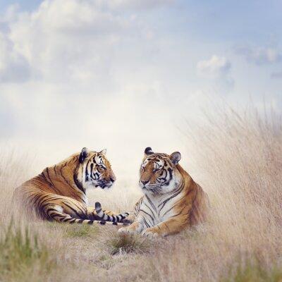 Poster Zwei Tiger