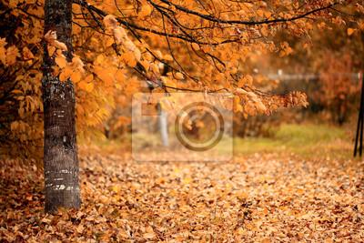 Poster Zweig mit gelben Blättern