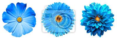 Sticker 3 surreale exotische blaue Blumen der hohen Qualität Makro lokalisiert auf Weiß. Grußkarte Objekte für Jubiläum, Hochzeit, Mütter und Frauen Tag Design