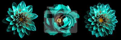 Sticker 3 surreale exotische Qualität Türkis Blumen Makro isoliert auf schwarz. Grußkarte Objekte für Jubiläum, Hochzeit, Mütter und Frauen Tag Design