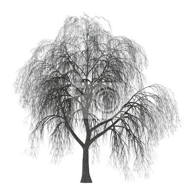 3D Abbildung Weide auf Weiß