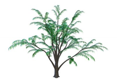 3D Rendering Albizia Tree on White