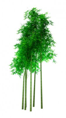 3D Rendering Bamboo Trees on White