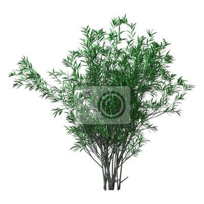 3D-Rendering Bush Oleander auf Weiß