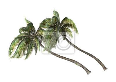 3D Rendering Coconat Palmen auf Weiß