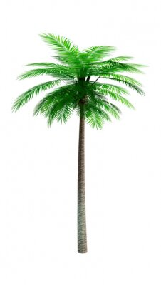 3D Rendering Coconut Palm Tree on White