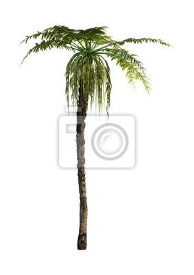 3D Rendering Dicksonia-Baum auf Weiß