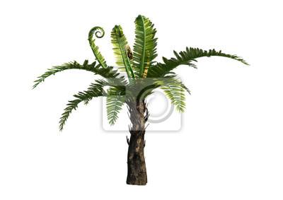 3D-Rendering Dicksonia-Baum auf Weiß
