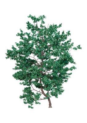 3D Rendering Island Oak on White
