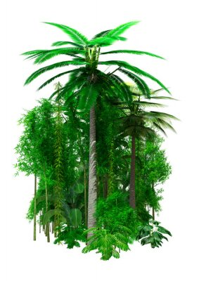 3D Rendering Jungle Plants on White