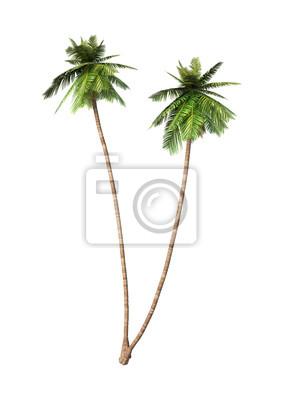 3D-Rendering-Kokosnuss-Palmen auf Weiß
