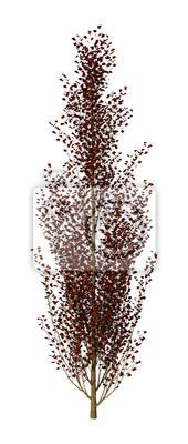 3D Rendering Lombardy Polplar Tree on White