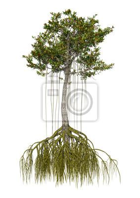 3D-Rendering-Mangrovenbaum auf Weiß