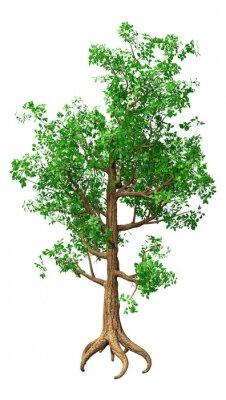 3D Rendering Oak Tree on White