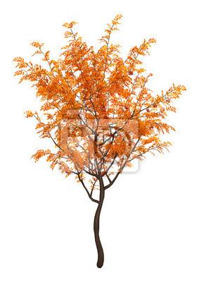 3D Rendering Rowan Trees on White