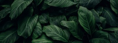 Sticker abstract green leaf texture, nature background, tropical leaf