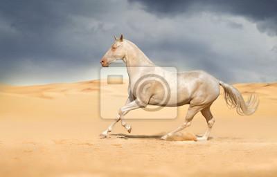 Achal-Tekkiner Pferde in der Wüste
