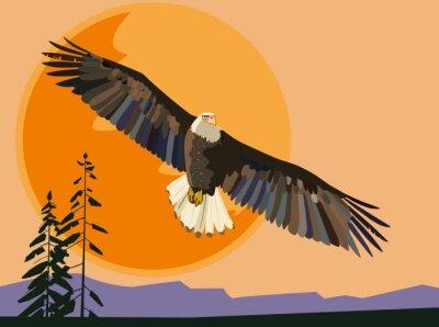 Adler fliegt gegen die untergehende Sonne. Vektorzeichnung
