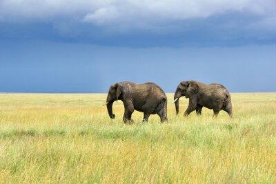 Sticker Afrikanische Elefanten
