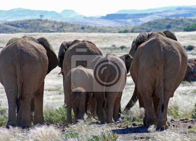 Sticker Afrikanische Elefanten zu Fuß durch Damaraland