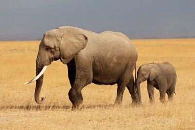 Sticker Afrikanischer Elefant mit Kalb, Amboseli National Park