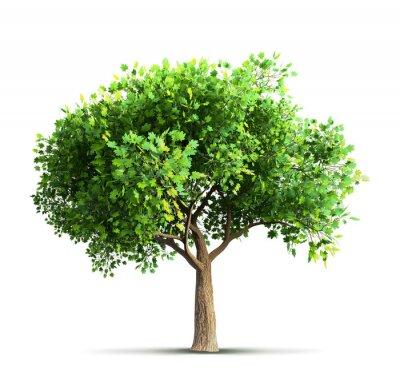 Sticker Ahorn-Baum isoliert