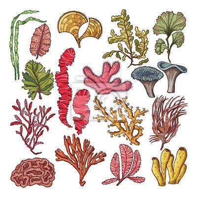 Algen Und Korallen Unterwasser Natürliche Pflanzen Isoliert