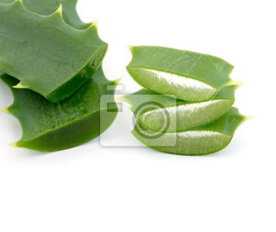Aloe Vera isoliert auf weiß
