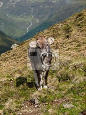 Sticker Alpine Kuh in Sellrein Bereich