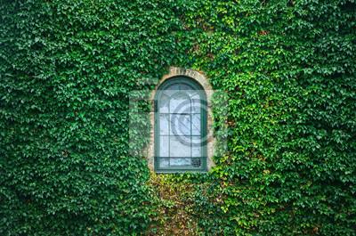 Alte Kirche Fenster von kriechenden Efeu Pflanzen umgeben