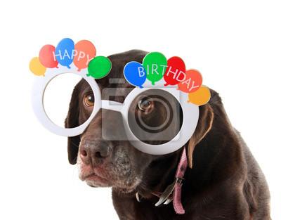 Alter Geburtstag Hund Notebook Sticker Wandsticker Traurig Hunde