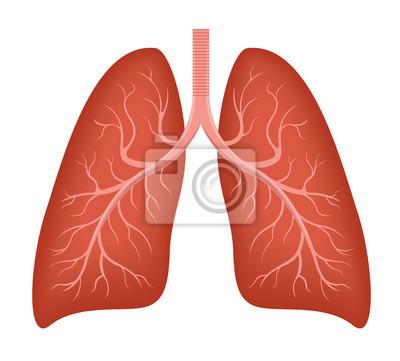 Anatomie der menschlichen lunge. krankheit atemwege krebs-grafiken ...