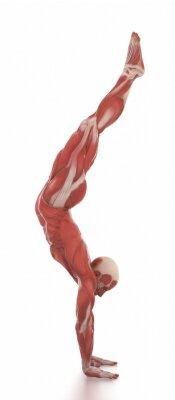 Sticker Anatomie Muskel-Karte weiß isoliert - aufwärmen Pose