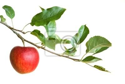 Sticker Apfel auf einem Zweig
