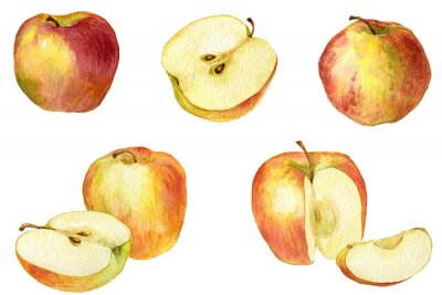 Sticker Apple drawing by watercolor
