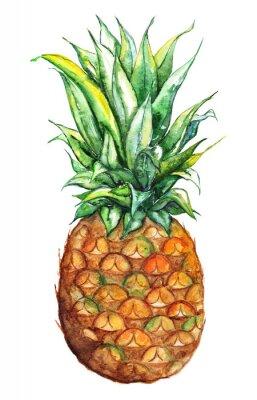 Sticker Aquarell Hand gezeichnet Ananas exotischen tropischen Früchten isoliert
